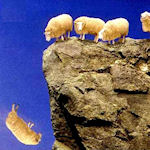 Falling Sheep